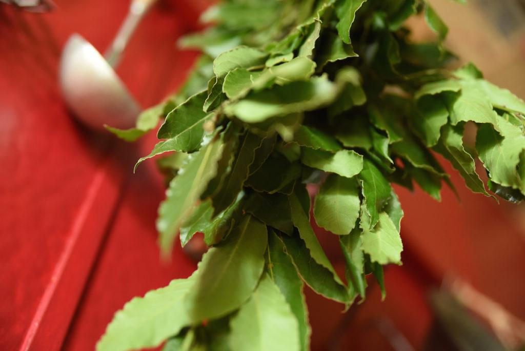 Laurier sauce - La Table à Rallonges