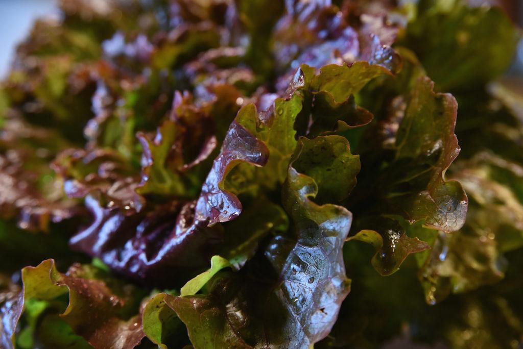 Salade du jardin - La Table à Rallonges